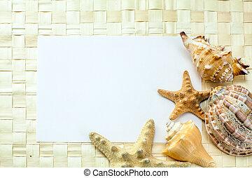 conchas marinas, en, un, hoja blanca, de, papel