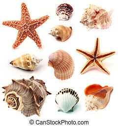 conchas marinas, estrellas de mar, conjunto