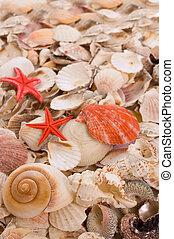 conchas marinas