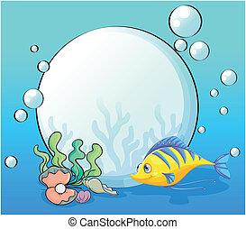conchas marinas, pez, mar, debajo