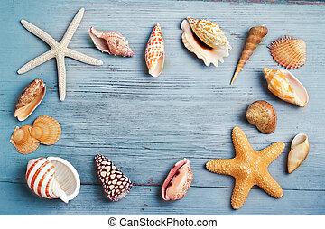 conchas marinas, turquesa, plano de fondo