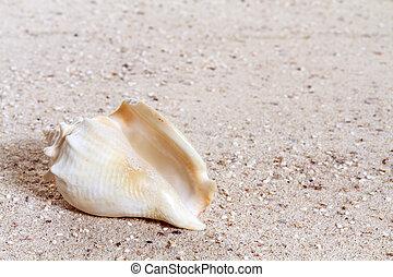 conchas, praia, arenoso