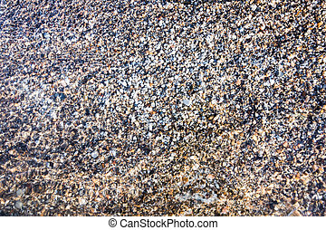 conchas, primer plano, arena, miniatura, mar