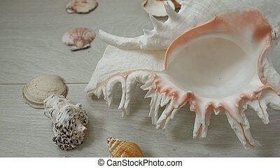 conchas, primer plano, encuesta, mar, tema