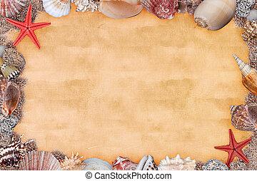 conchas, quadro, mar