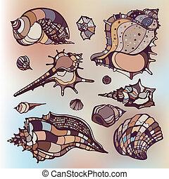 conchas, set., mar, experiência., obscurecido