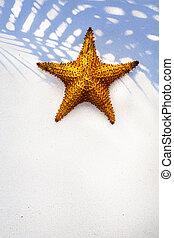 conchiglia, arte, fondo, mare sabbia, stella