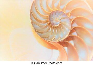 conchiglia nautilo, fibonacci, simmetria, sezione...