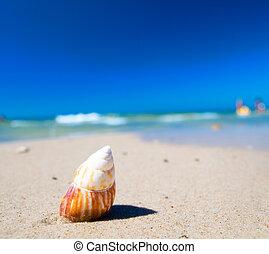 conchiglia, spiaggia, mare