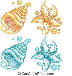conchiglia, starfish