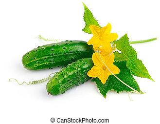 concombre, feuilles, frais, vert, fruits