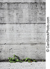 Concrete and small plants background