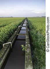 concrete paddy fields irrigation