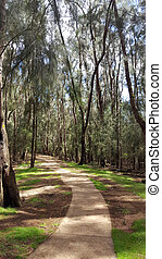 Concrete pathway in forest of ironwood trees