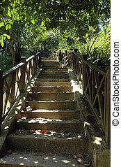 concrete stairs in a park