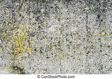 Concrete wall covered with fungus. Mold on the concrete wall.