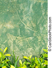 concrete wall texture with green leaf