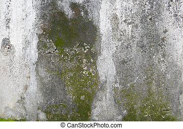 concrete wall with grunge texture and moss green algae , texture background