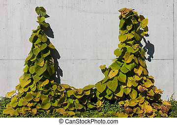 concrete wall with ivy