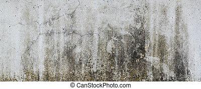 concreto, con, funghi