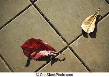 concreto, rua, folha, dois, bloco