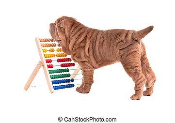conde, ábaco, perrito, shar-pei, aprendizaje