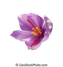 condimento, costoso, azafrán, close-up., brote flor, abierto