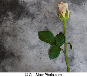Condolence card - rose - Rose on black and white background...