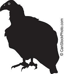 condor - silhouette of condor