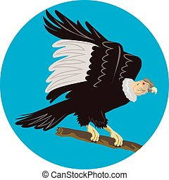 condor,  Perching,  california,  retro, ramo, cerchio