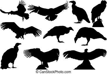 Condor Silhouette vector illustration