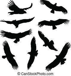 condor, silhouette