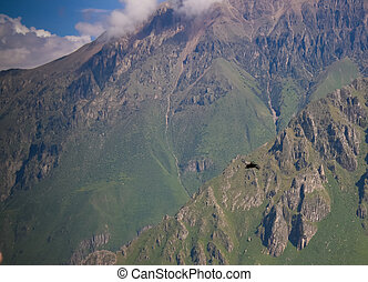 Condors above the Colca canyon at Condor Cross or Cruz Del...