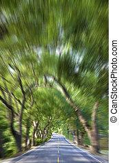 conduite, mouvement, par, forêt, barbouillage, vert, route