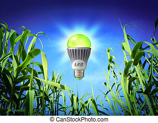 conduzido, lâmpada, crescimento, -, ecologia