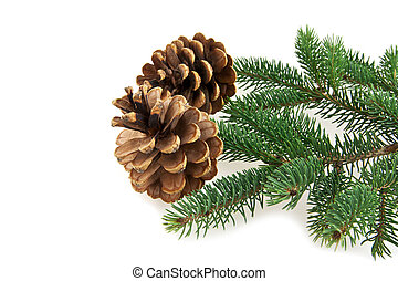 cone and branch of fir-tree on a white background
