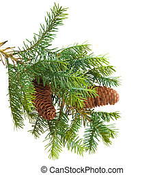 Cone and christmas tree isolated on white
