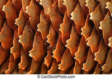 Cone - Macro of a cone