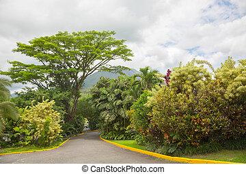 Cone of volcano Arenal, Costa Rica