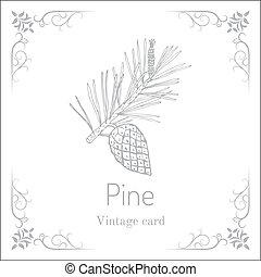 cone., vendange, carte, branche, pin
