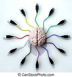conectado, mente