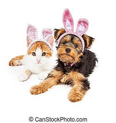conejito de pascua, yorkshire, perrito, y, gatito