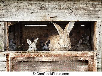conejitos, madre, conejo, recién nacido