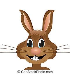 conejo, primer plano