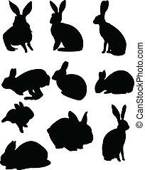 conejos, colección