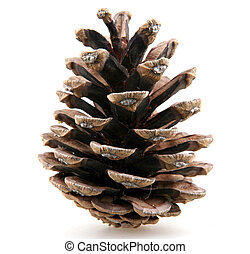 cones, сосна