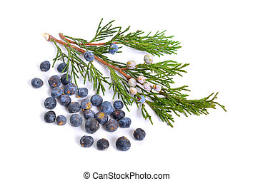 Cones and leaves of Juniper isolated on white background.