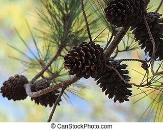 Cones on a tree