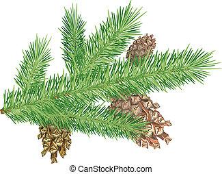 Cones on branch - Three cones on christmas tree branch. ...