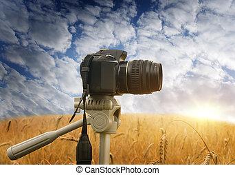 confection, photographie, nature.